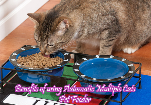 Benefits of using Automatic Multiple Cats Pet Feeder