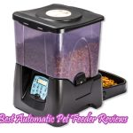 9 Best Automatic Pet Feeder Reviews