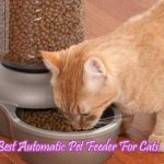 Best Automatic Pet Feeder For Cats