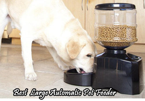 Best Large Automatic Pet Feeder