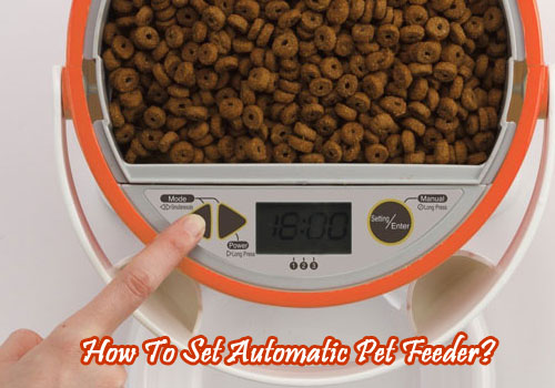 How To Set Automatic Pet Feeder