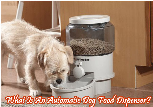 What Is An Automatic Dog Food Dispenser