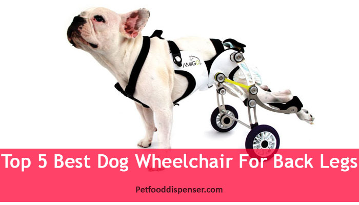 wheels-chair-for-back-legs