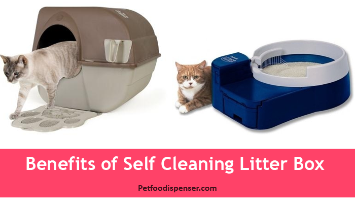 Benefits of using a self cleaning litter box